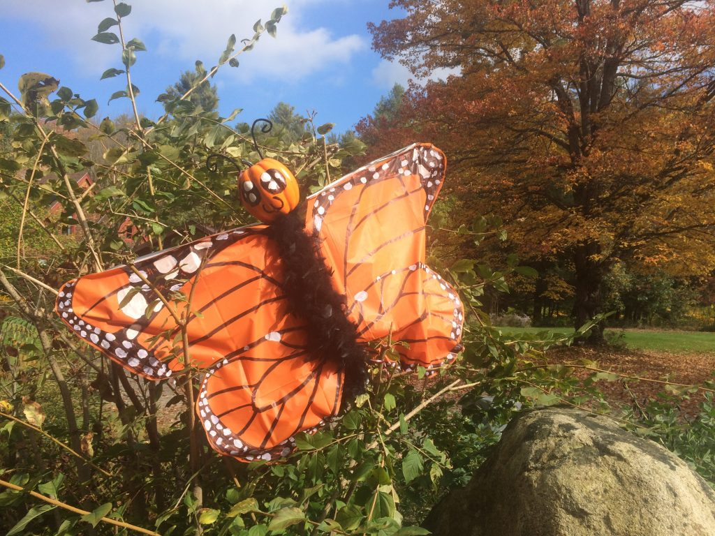 Pumpkin Butterfly at 826 Stage Rd