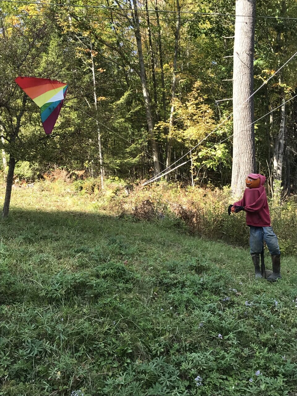 Let's go fly a kite at 596 Stage Rd