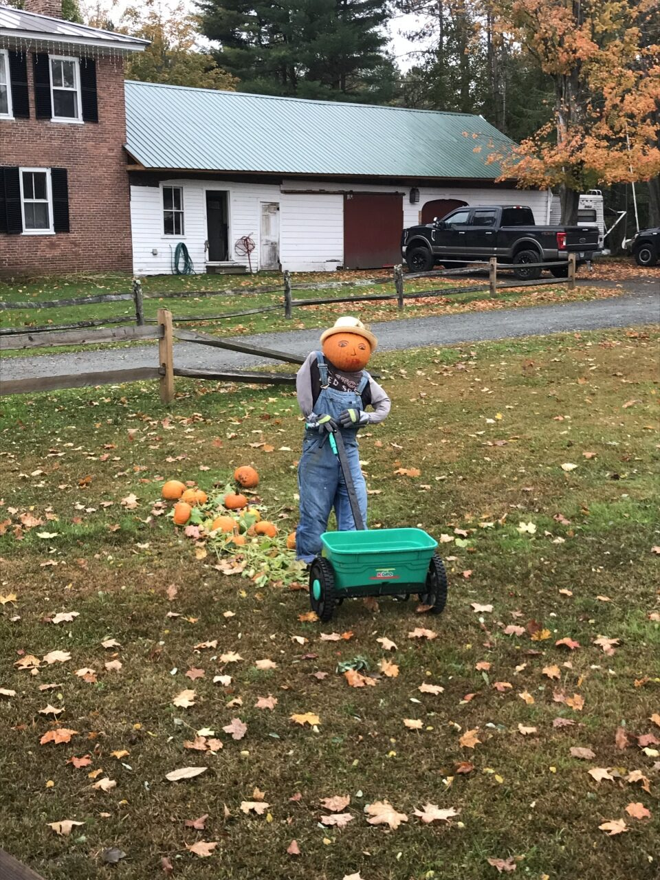 Fertilizing the pumpkins at 1103 Route 12A