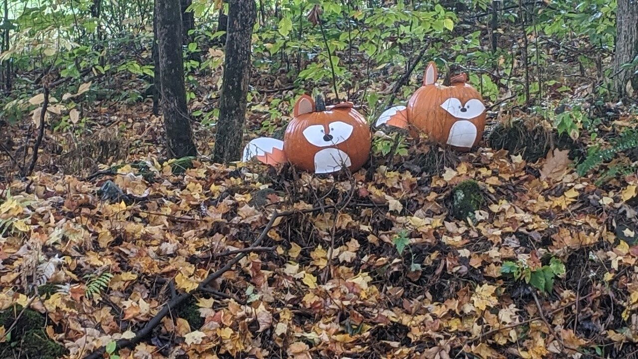 Foxy Pumpkin Duo at 15 Ladieu Rd